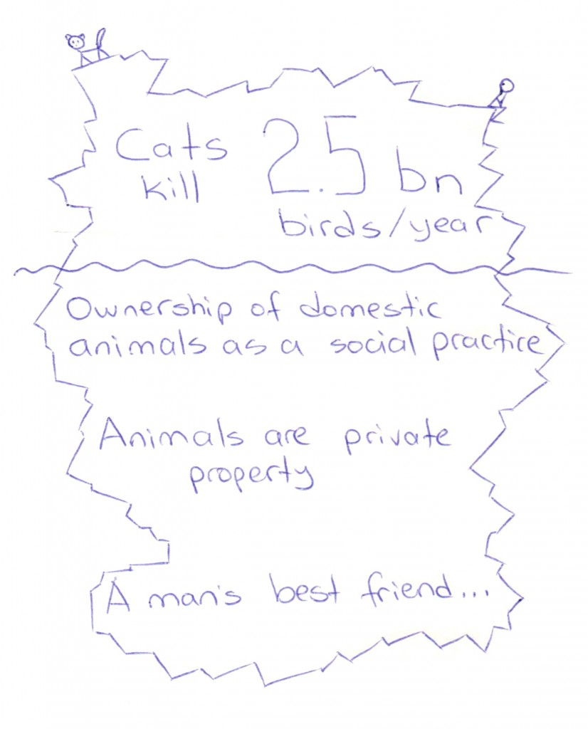 021113 Cats and Birds